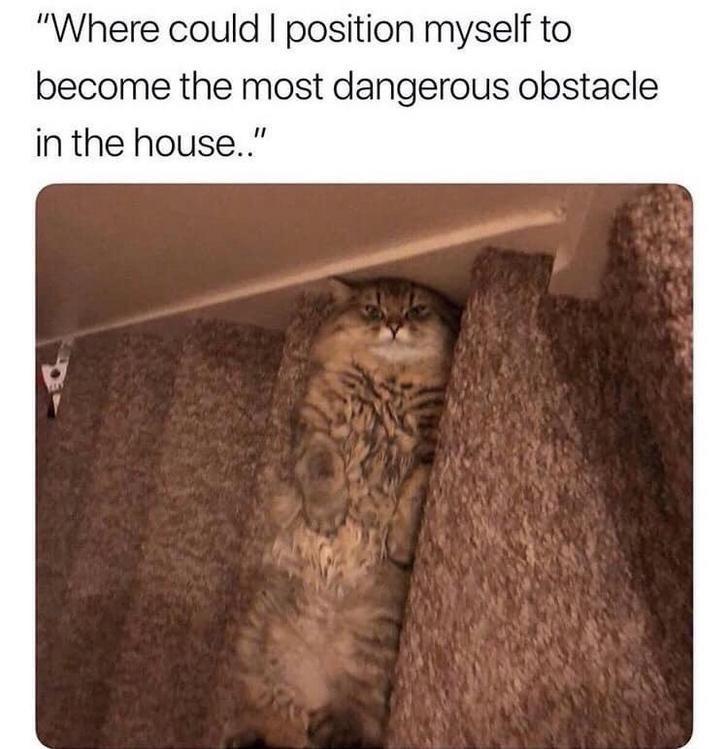 cat meme funny - 9344136192