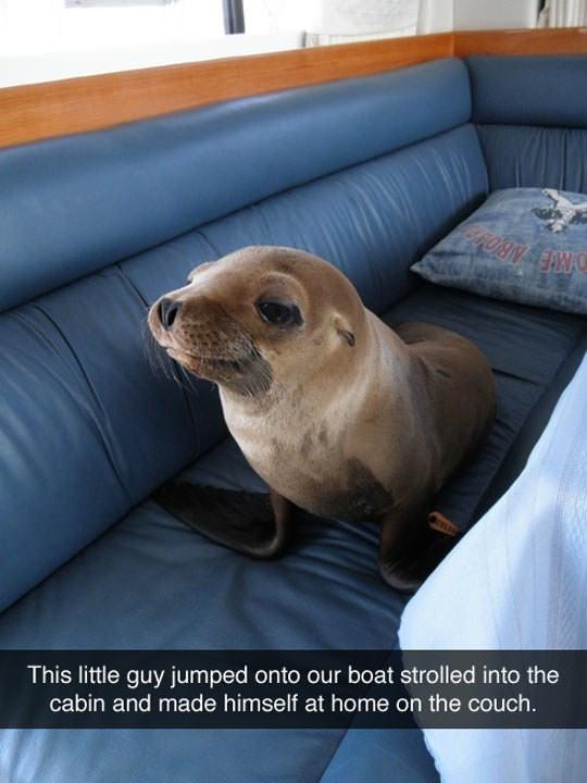 snapchat seal cute funny home - 9344136448