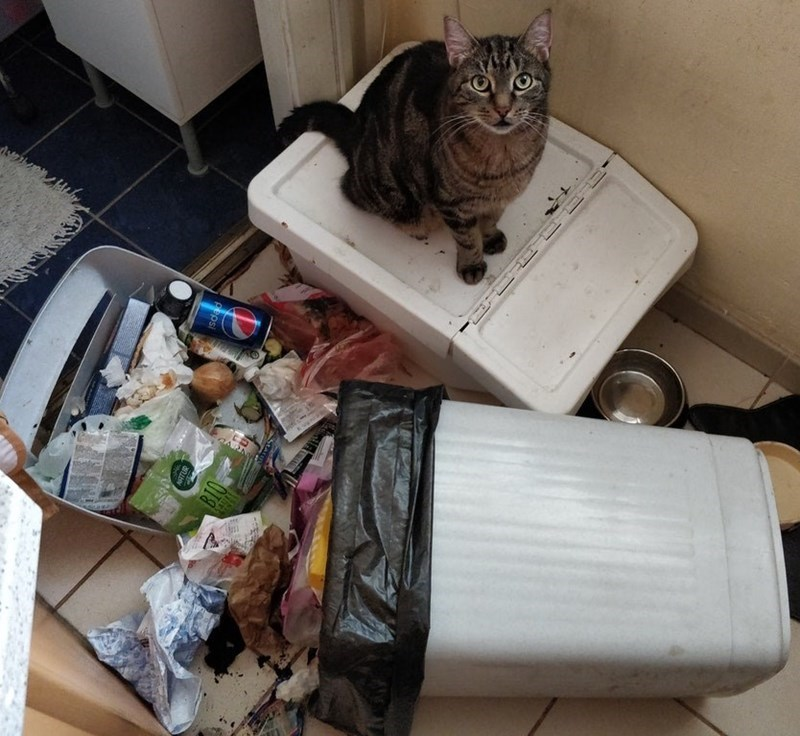 cat sitting next to a rubbish bin that fell over with rubbish spilling all over the ground