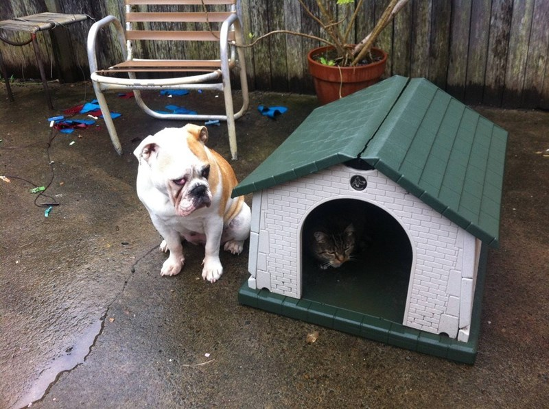 cat sitting inside dog home with dog sitting next to it looking sad