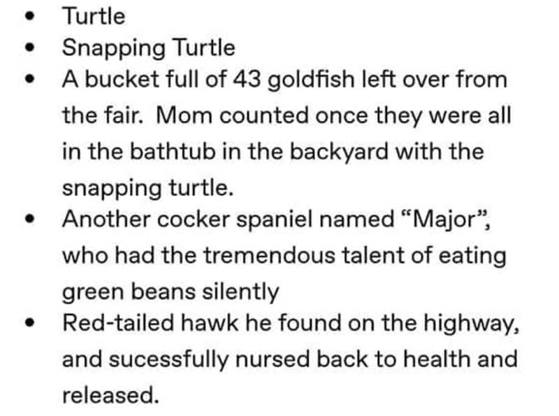"grandpa's animals - Text - Turtle Snapping Turtle A bucket full of 43 goldfish left over from the fair. Mom counted once they were all in the bathtub in the backyard with the snapping turtle Another cocker spaniel named ""Major"", who had the tremendous talent of eating green beans silently Red-tailed hawk he found on the highway, and sucessfully nursed back to health and released."