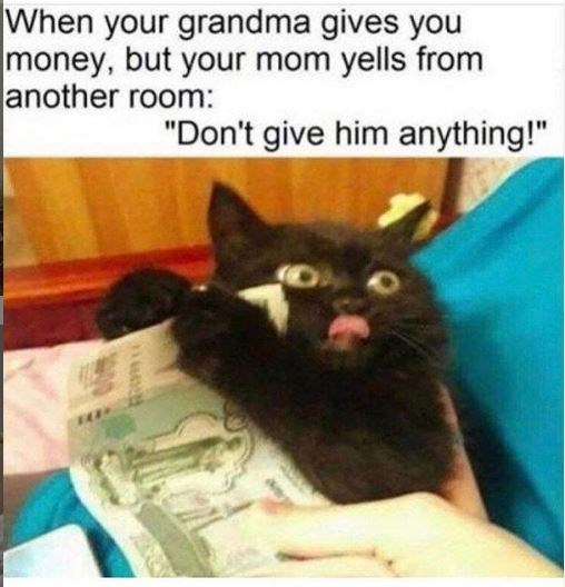 "Cat - When your grandma gives you money, but your mom yells from another room: ""Don't give him anything!"""