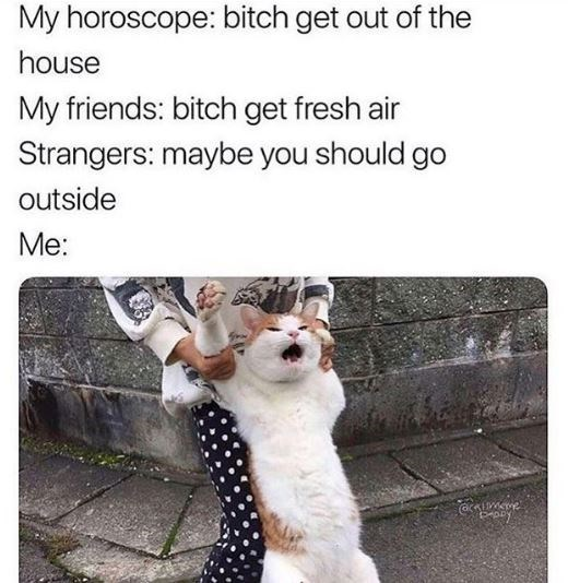 Canidae - My horoscope: bitch get out of the house My friends: bitch get fresh air Strangers: maybe you should go outside Me: