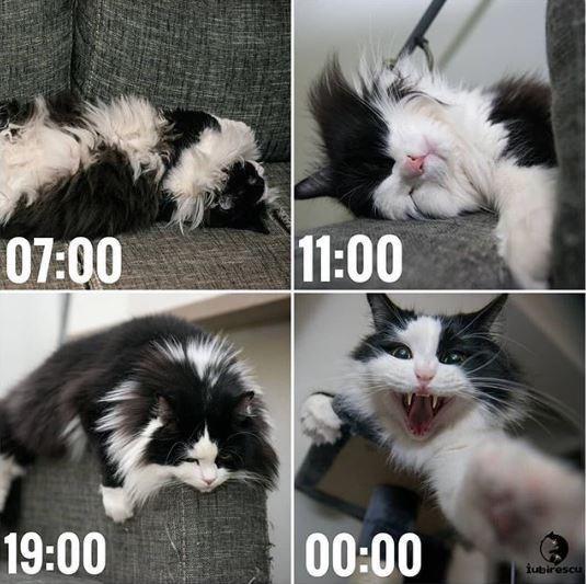 Cat - 11:00 07:00 19:00 90:00 iubirescu