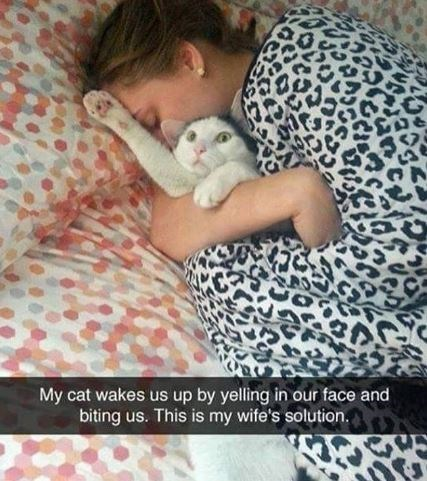 Cat - My cat wakes us up by yelling in our face and biting us. This is my wife's solution.