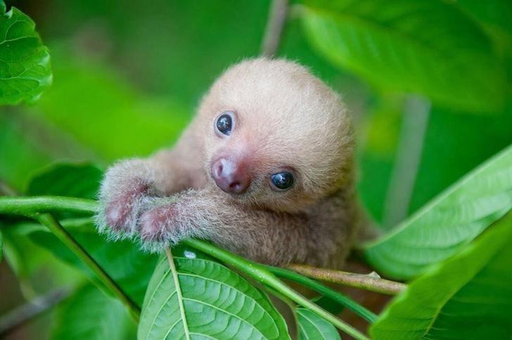 cute animal - Vertebrate