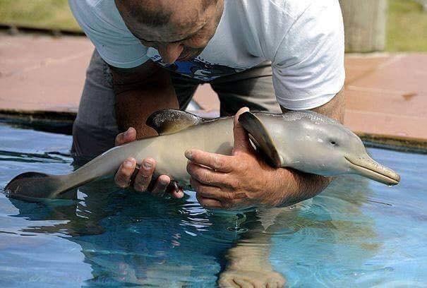 cute animal - Common bottlenose dolphin