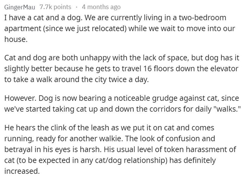 """Text - 4 months ago GingerMau 7.7k points I have a cat and a dog. We are currently living in a two-bedroom apartment (since we just relocated) while we wait to move into our house. Cat and dog are both unhappy with the lack of space, but dog has it slightly better because he gets to travel 16 floors down the elevator to take a walk around the city twice a day. However. Dog is now bearing a noticeable grudge against cat, since we've started taking cat up and down the corridors for daily """"walks."""""""