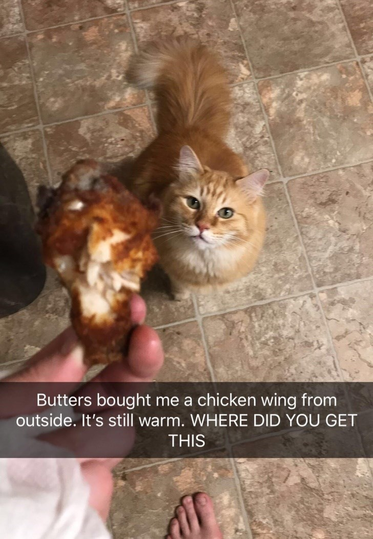 Cat - Butters bought me a chicken wing from outside. It's still warm. WHERE DID YOU GET THIS