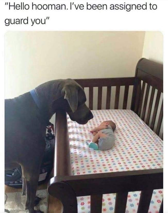 """meme - Product - """"Hello hooman. I've been assigned to guard you"""""""