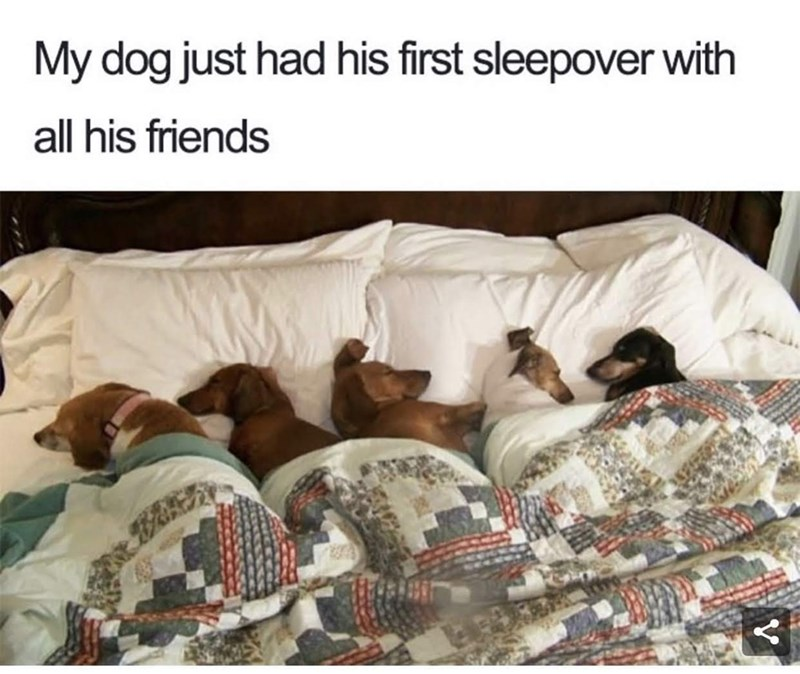 meme - Product - My dog just had his first sleepover with all his friends