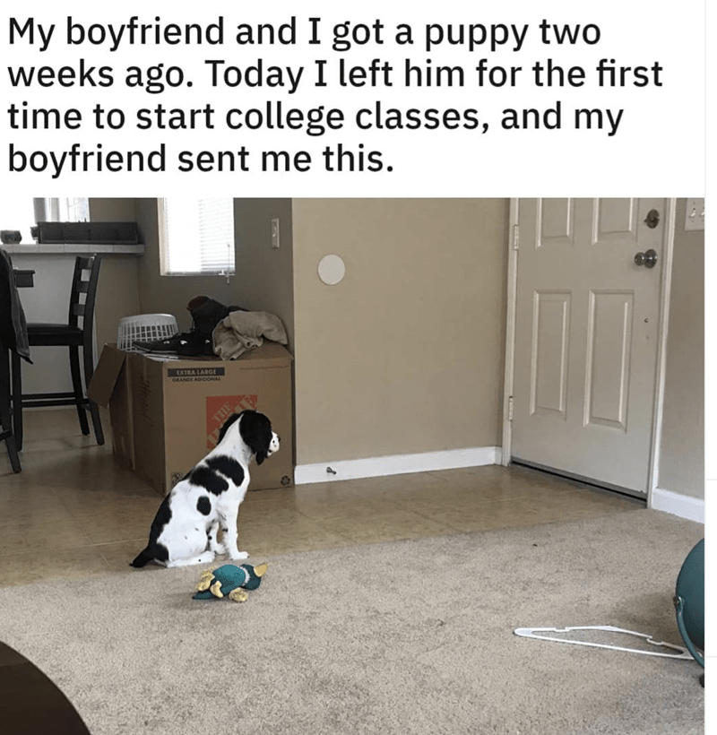 meme - Canidae - My boyfriend and I got a puppy two weeks ago. Today I left him for the first time to start college classes, and my boyfriend sent me this. EXTRA LARGE GRANDE ADICIONAL