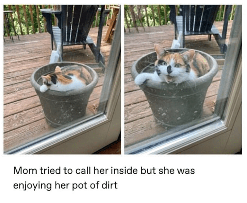 meme - Cat - Mom tried to call her inside but she was enjoying her pot of dirt