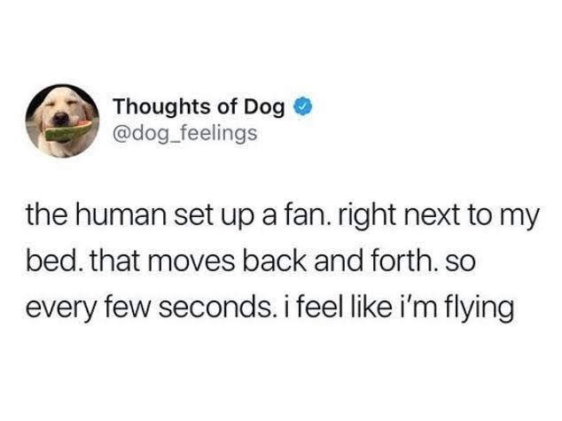 meme - Text - Thoughts of Dog @dog feelings the human set up a fan. right next to my bed. that moves back and forth. so every few seconds. i feel like i'm flying