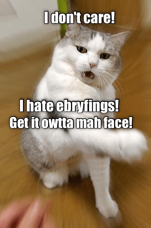 cat meme - 9344614144