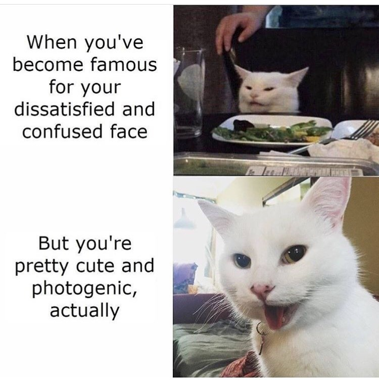meme - Cat - When you've become famous for your dissatisfied and confused face But you're pretty cute and photogenic, actually