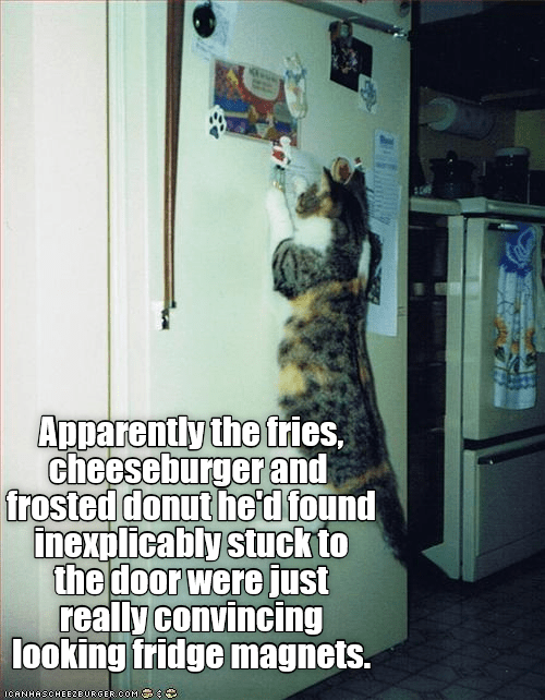 cat meme about strong magnets and being stuck to the fridge
