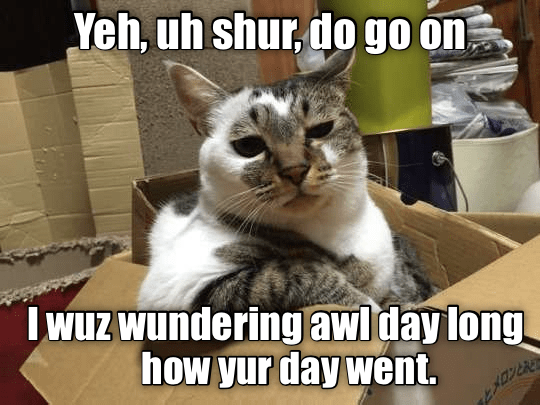 cat cat meme conversation - 9344666112