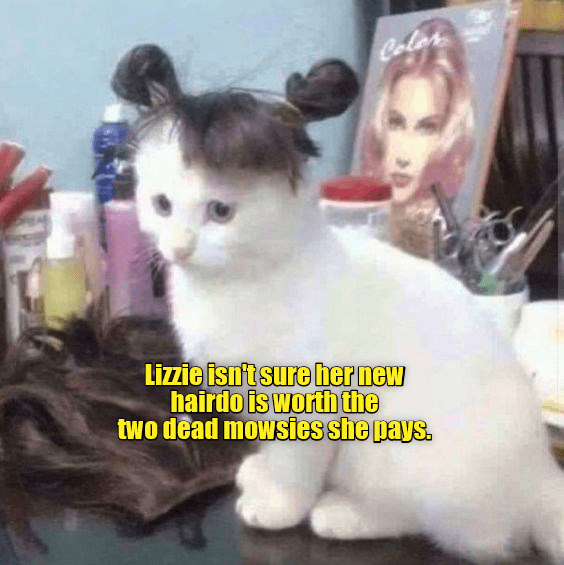 wig i can has funny cat memes mouse - 9344668928