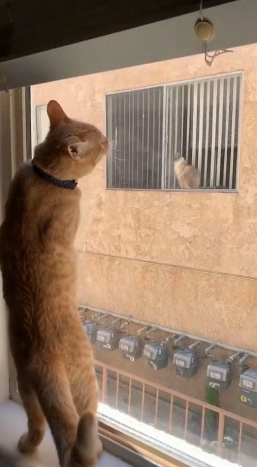 cats - Cat