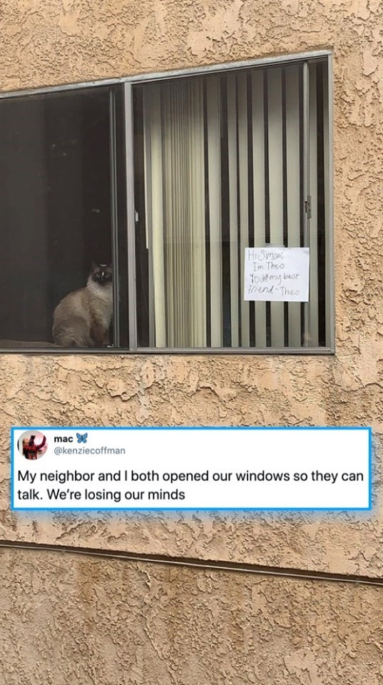 cats - Zoo - HiStmo Im Theo best oudmy fund The mac @kenziecoffman My neighbor and I both opened our windows so they can talk. We're losing our minds