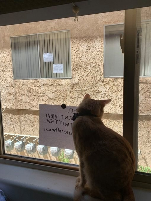 cats - Cat - JA SIV TM3 Nomtois