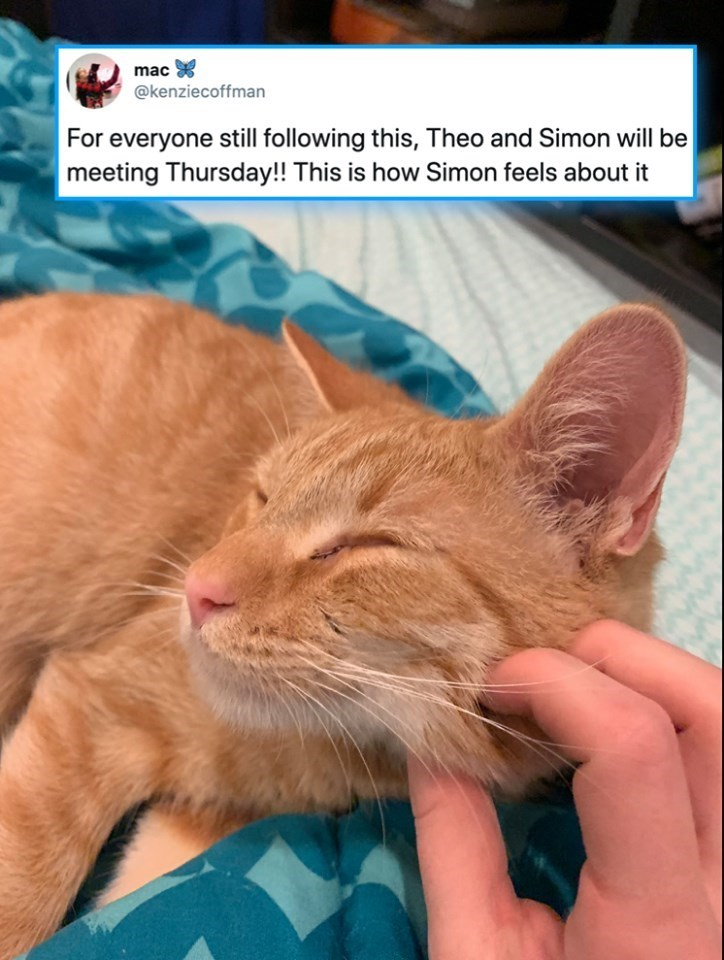 cats - Cat - mac @kenziecoffman For everyone still following this, Theo and Simon will be meeting Thursday!! This is how Simon feels about it