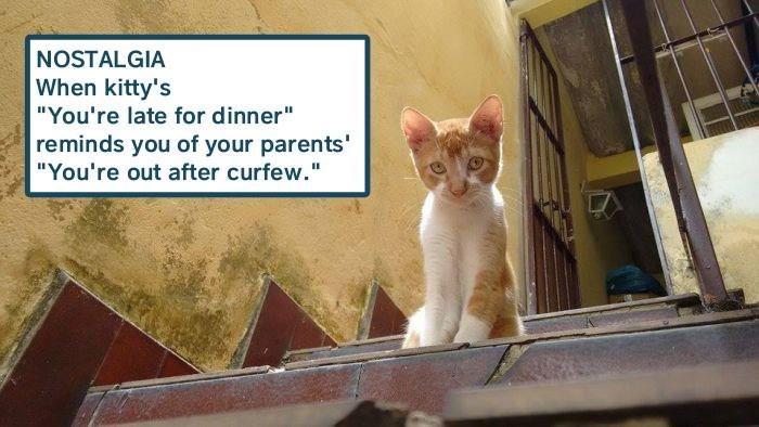 nostalgia meme dinner cat memes - 9344703488