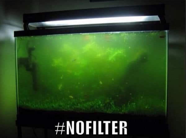 Green - #NOFILTER