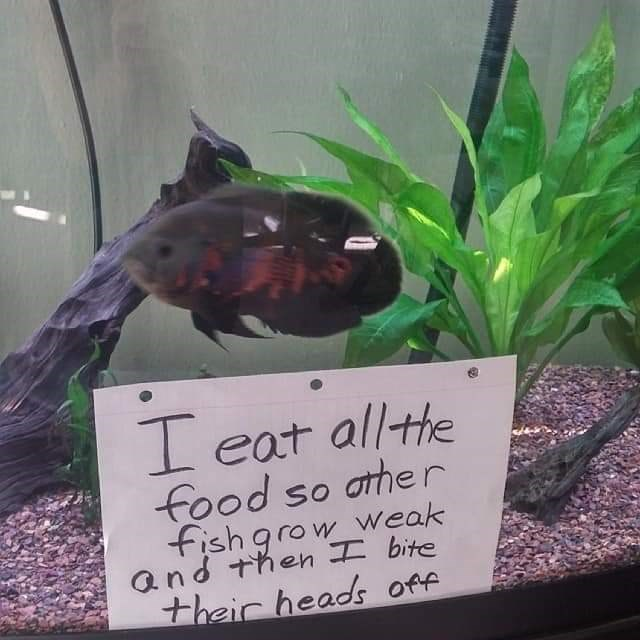 Fish - Leat allthe food so athe r fish grow weak and then bite their heads off
