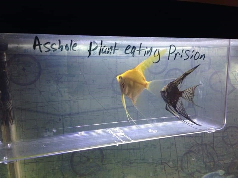 Organism - Asshale Plast entwg Prision 21