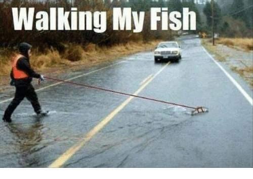 Asphalt - Walking My Fish