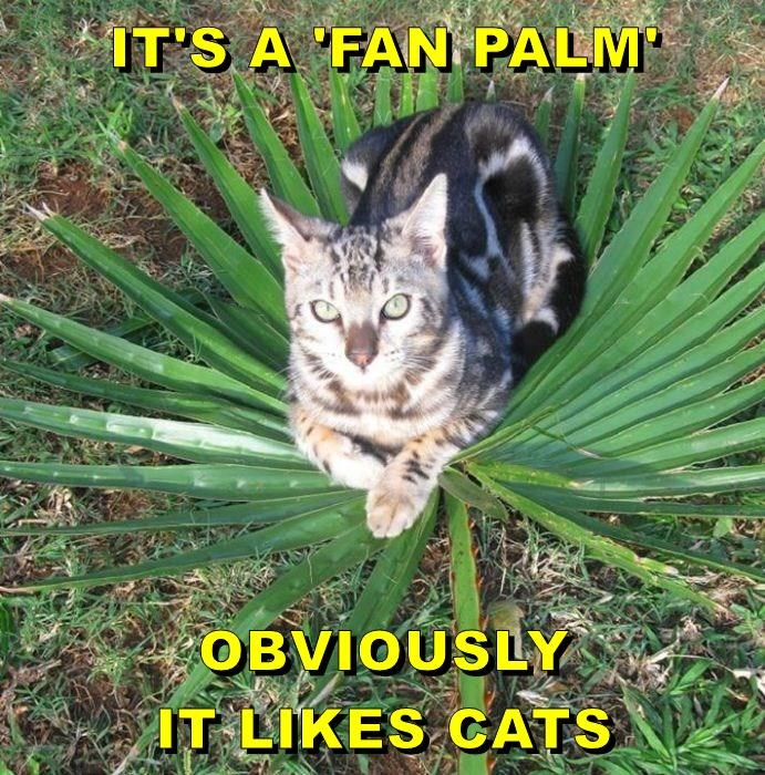 palm trees cat meme - 9344709376