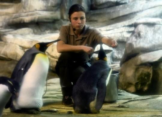 zoo keeper feeding skipper and ping gay penguins