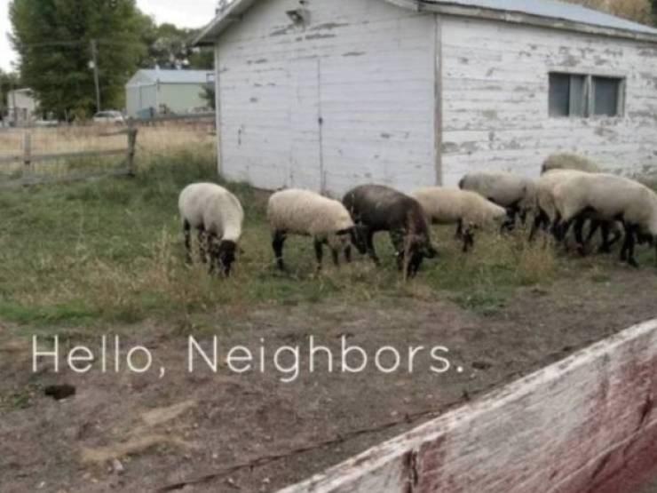 Herd - Hello, Neighbors..