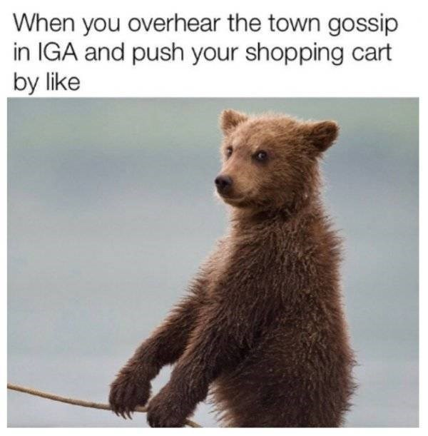 Brown bear - When you overhear the town gossip in IGA and push your shopping cart by like