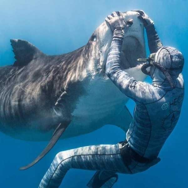 amazing animal photo - Whale shark - 2HEC