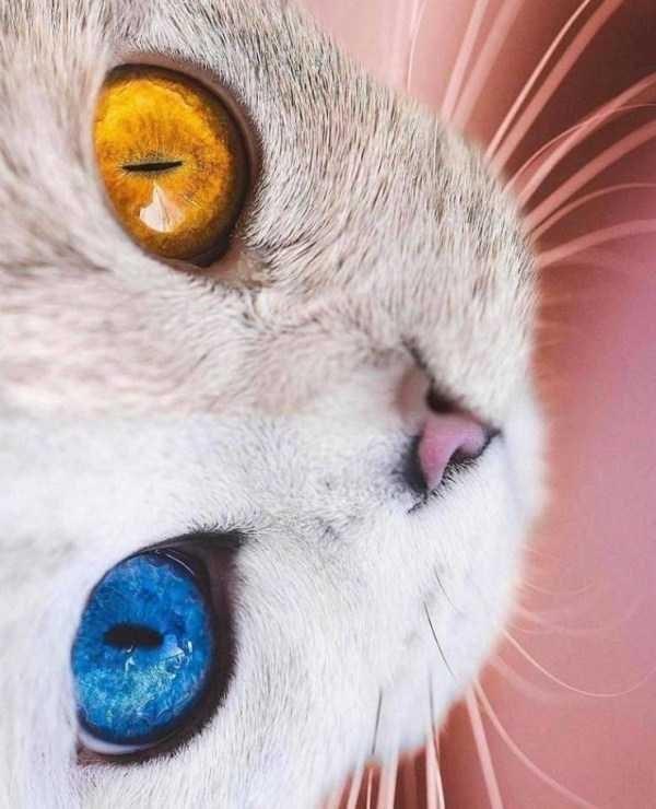 amazing animal photo - Cat