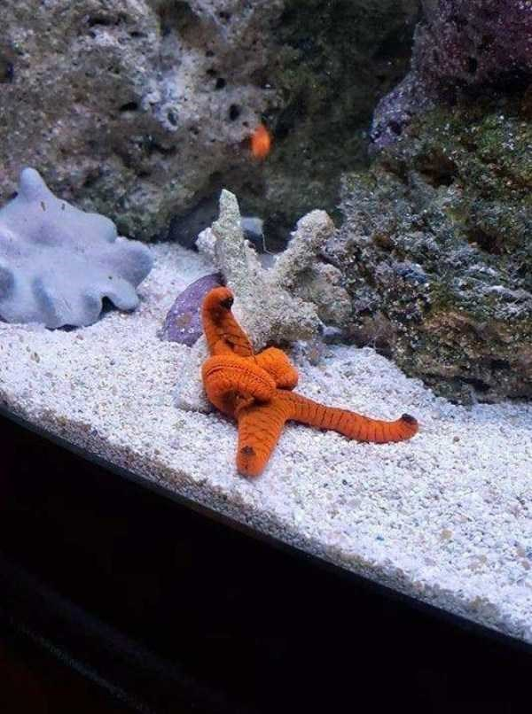 amazing animal photo - Starfish