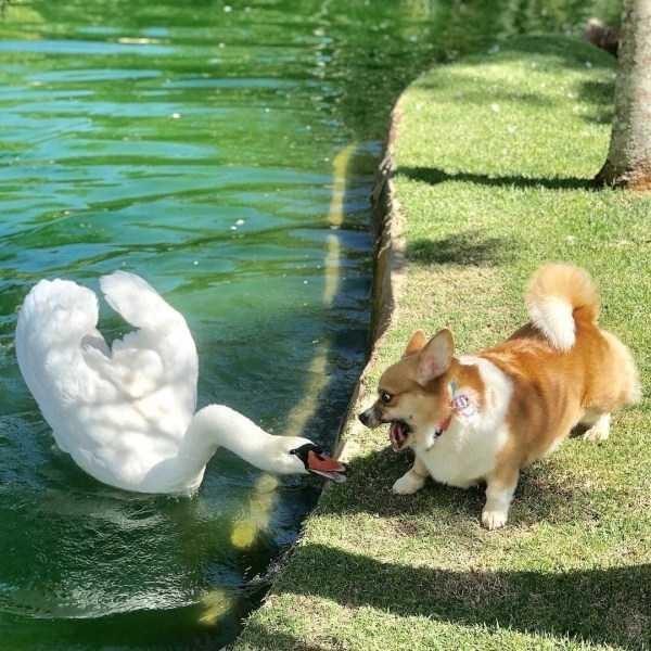 amazing animal photo - Vertebrate