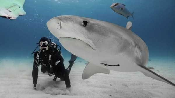 amazing animal photo - Fish - HECS