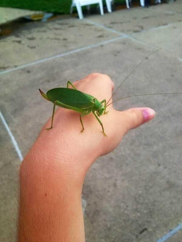 amazing animal photo - Insect