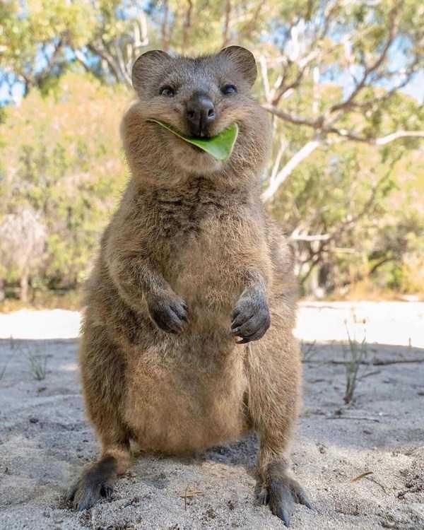 amazing animal photo - Mammal