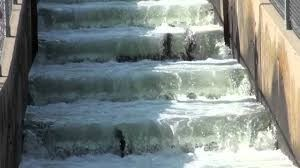 three fish jumping upwards against the current in a fish ladder