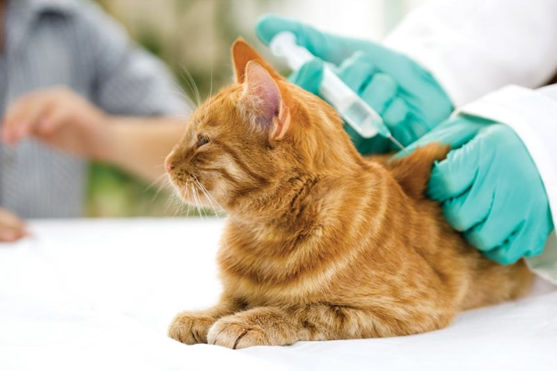 Cat allergy vaccine breakthrough