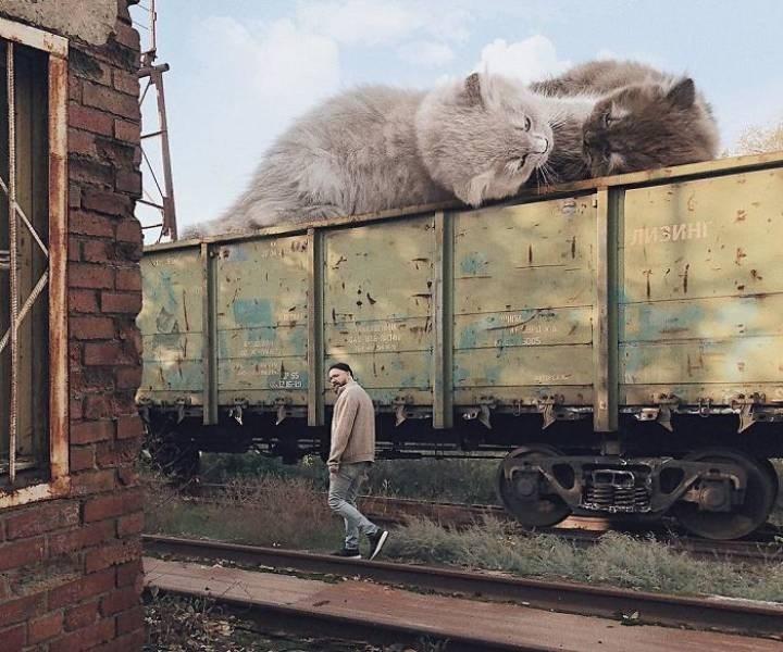giant cat photoshops - Transport - ЛИ БИНГ РАЕТА ран Е зы Н К