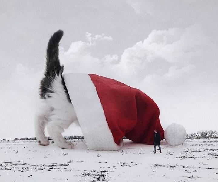 giant cat photoshops - White