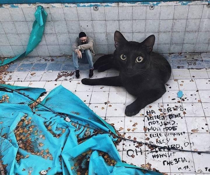 giant cat photoshops - Blue - MOn Ppos REC QHr CHE3A n.13