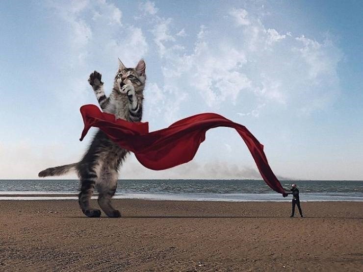 giant cat photoshops - Sky