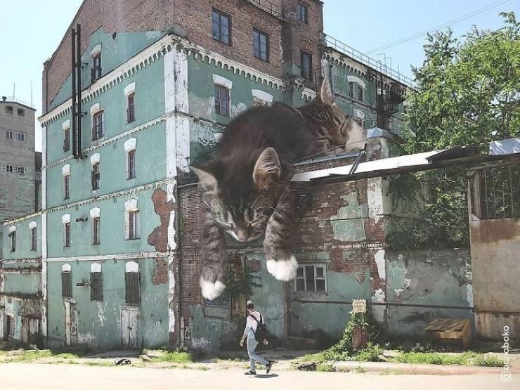 giant cat photoshops - Building - 1 octoboko
